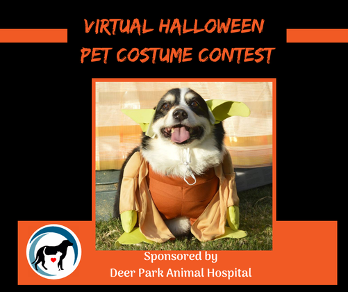 virtual pet halloween costume contest deer park animal hospital